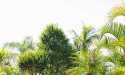 Coral Cay Adventure Golf