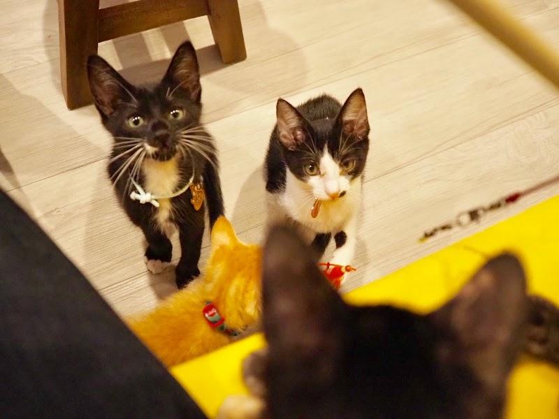 保護 猫 カフェ ひだまり 号