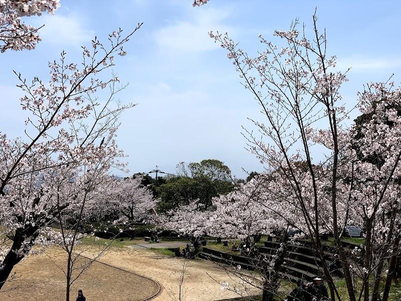 桜の名所 甘木公園