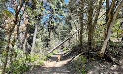 Deer Creek/Dry Creek/North Mountain Trail
