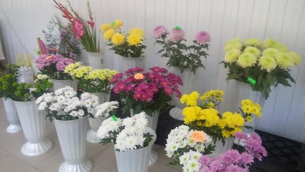 Низкие, магазин цветов белая калитва