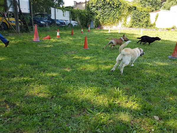 Residncia Canina Campdor