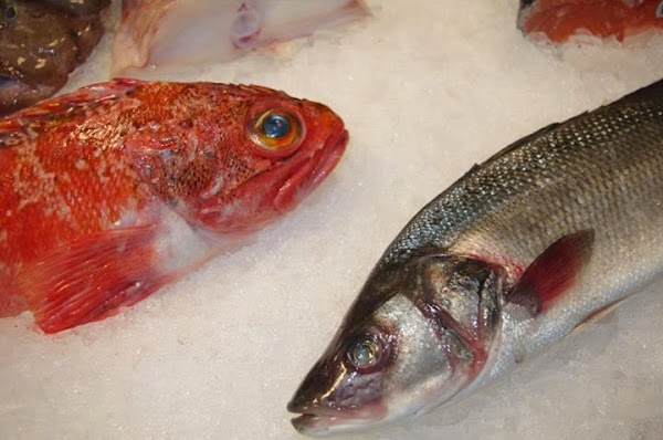 matxitxako pescaderias