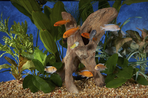 Tropical Fish Store «Tri State Aquariums», reviews and photos, 191 NY-59, Suffern, NY 10901, USA