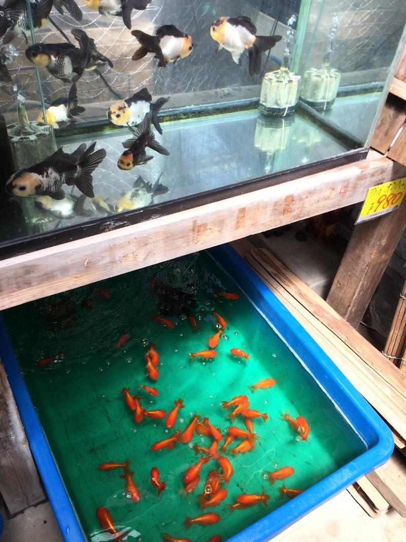 斧田 観賞 魚 センター 大和郡山の金魚店「斧田観賞魚センター」を紹介!【画像あり】