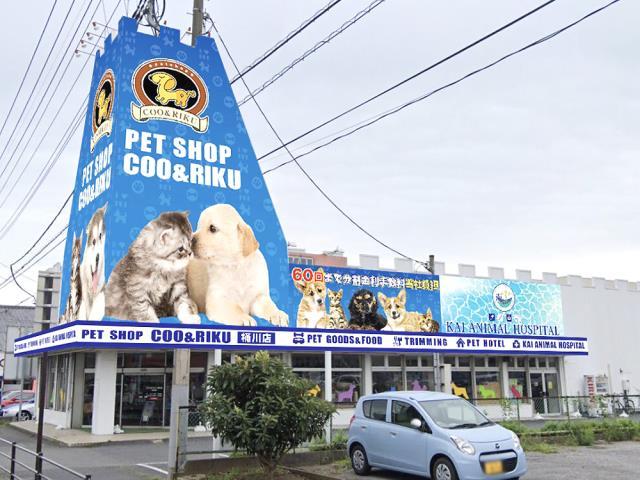 桶川 クーアンドリク ペットショップ「Coo&RIKU」|全国に200店舗以上