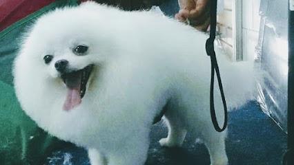 Pet Shop Estética Animal