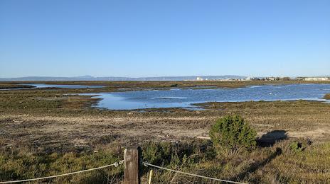Tree Removal in Bair Island, CA