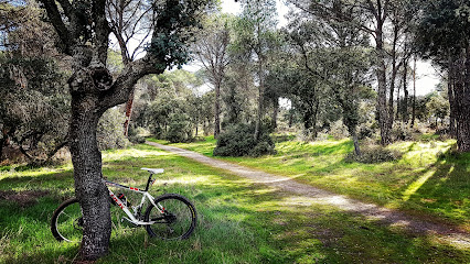 Bosque Villaviciosa