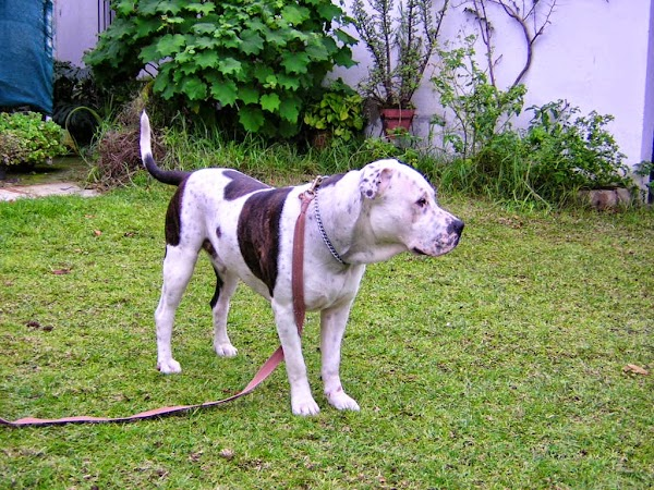 Escuela y Residencia Canina Maya