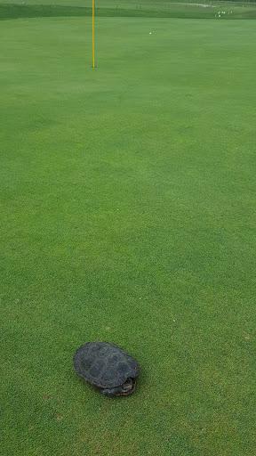 Golf Course «Lido Golf Club», reviews and photos, 255 Lido Blvd, Lido Beach, NY 11561, USA