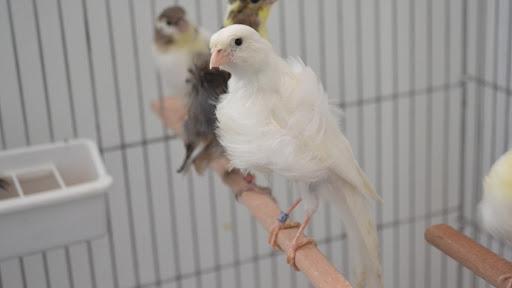 Canary Home