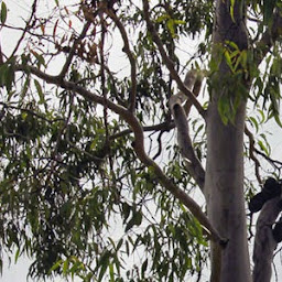 Find the best Tree Removal in Mudgeeraba