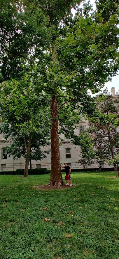 Indianapolis Moon Tree