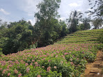 Khu du lịch sinh thái cộng đồng Kotam