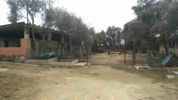 Residencia canina Animalandia