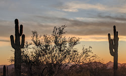 McDowell Sonoran Preserve Gateway Trail