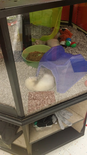 Pet Supply Store «Petco Animal Supplies», reviews and photos, 10383 Reisterstown Rd, Owings Mills, MD 21117, USA