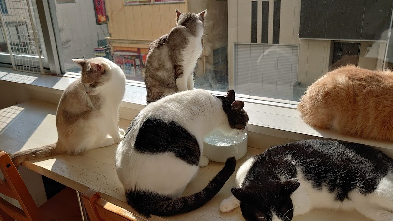 里親募集型保護猫ふれあいサロンOhana
