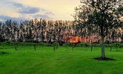 Summer Crush Vineyard & Winery
