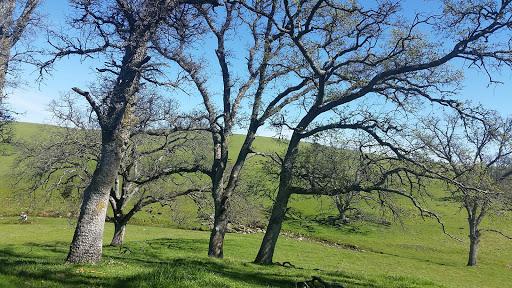 Nature Preserve «Deer Creek Hills Preserve», reviews and photos, Latrobe Rd, Sloughhouse, CA 95683, USA