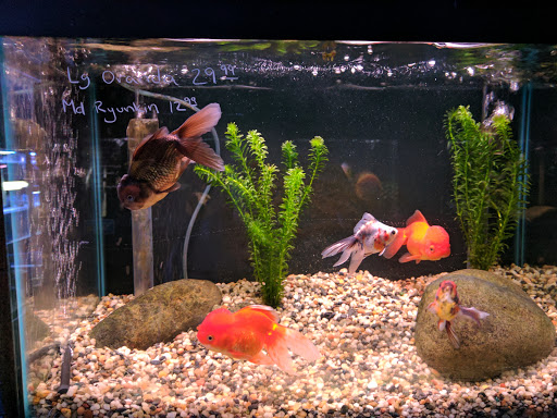 Pond Fish Supplier «Ultimate Aquarium Inc», reviews and photos, 2625