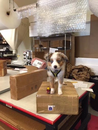 Pack Rat Shipping Services in New Orleans, Louisiana
