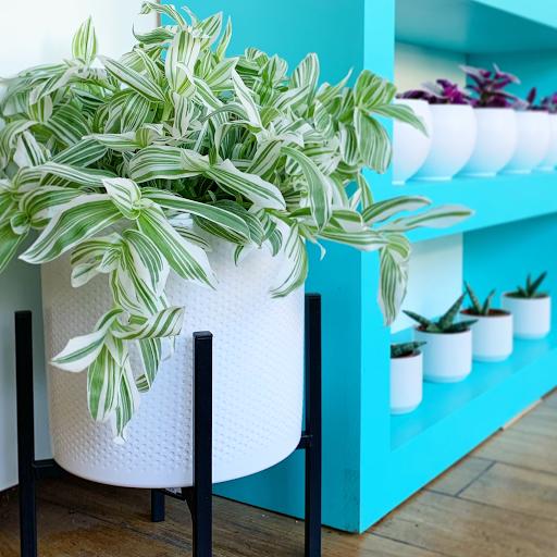 Garden center The Plant Shelf in Kingston (ON) | LiveWay