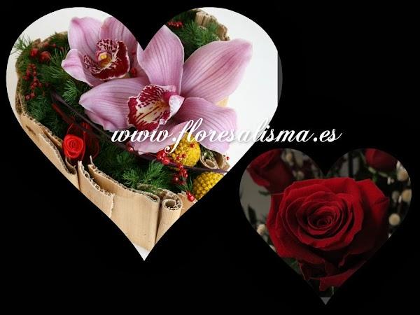 Alisma Floristas