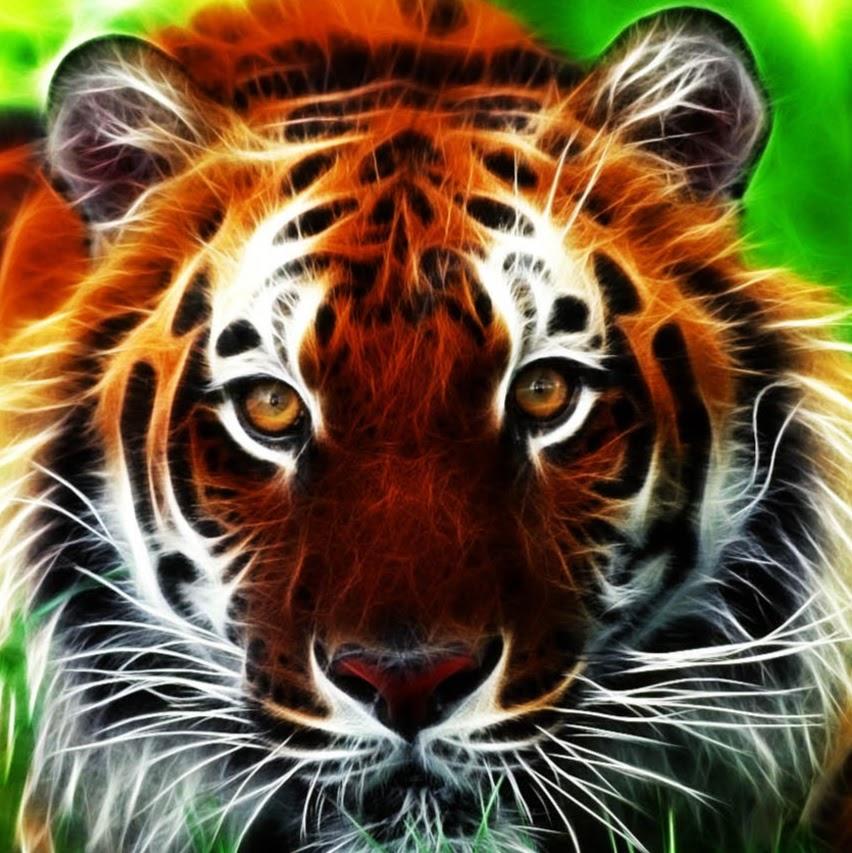 Tiger 3D Wallpapers 2.jpg