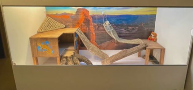 Minimalist terrarium with white walls