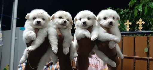 Sams pets - Pet Shop in Thoothukudi