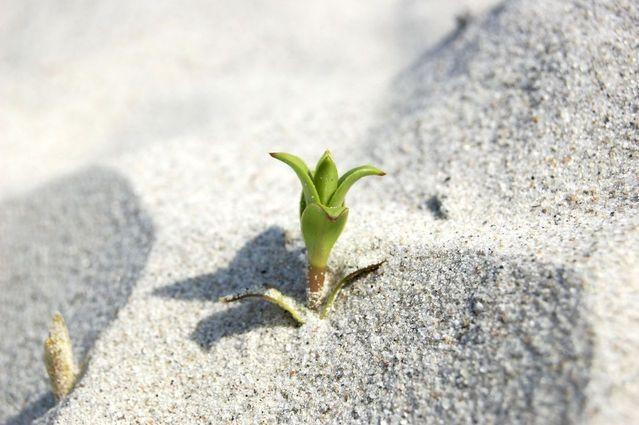 Commencez par de petits pas