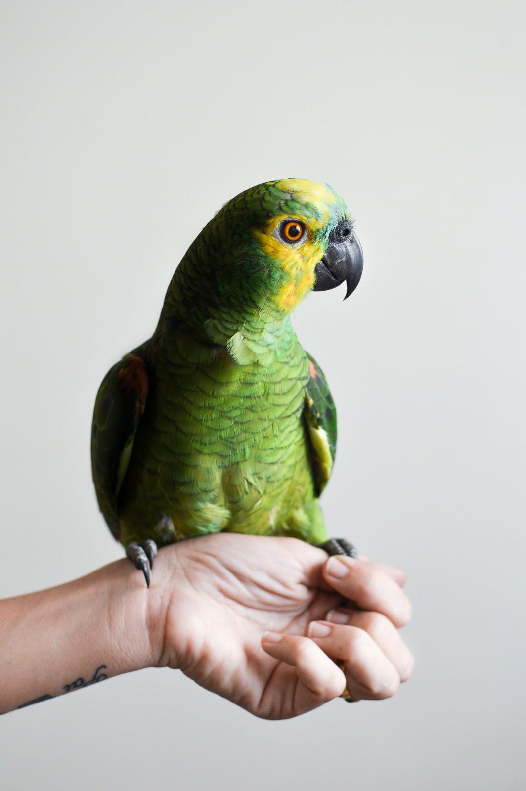 a parrot sitting on a hand