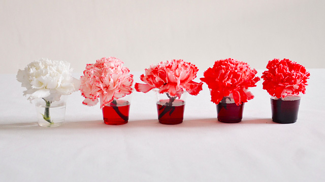 How To Dye Flowers A Different Colour In Just 6 Steps My