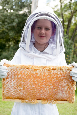 How to collect honeycomb from your hive