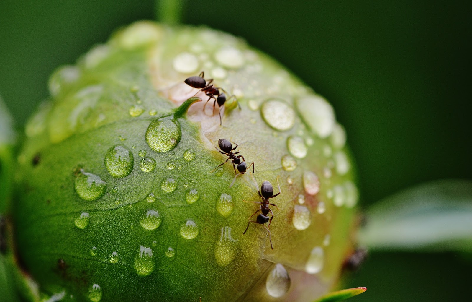 Ants climbing over a plant