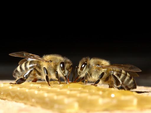 Какие препараты для пчел нужны