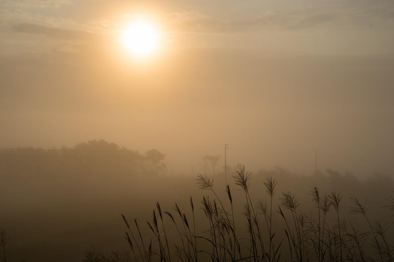 深まるゆく朝霧