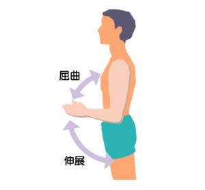 ひじの屈曲と伸展