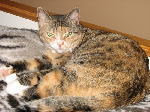 Lola marraskuussa 2008