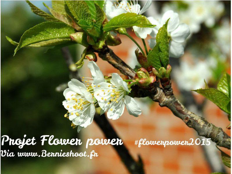 #flowerpower2015- logo