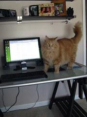 Jasper on desk