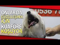 Evcil Hayvanlar Pet Kuaföründe Bakıma Giriyor - İhlas Haber Ajansı
