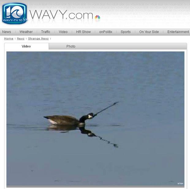 Reportagem da Wavy TV exibe imagem do ganso nadando com fecha no pescoço (Foto: Reprodução)