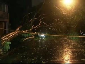 Árvore caiu sobre carro na Rua Rodésia, em Pinheiros (Foto: Reprodução/TV Globo)