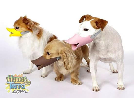 bico-de-pato-para-cães
