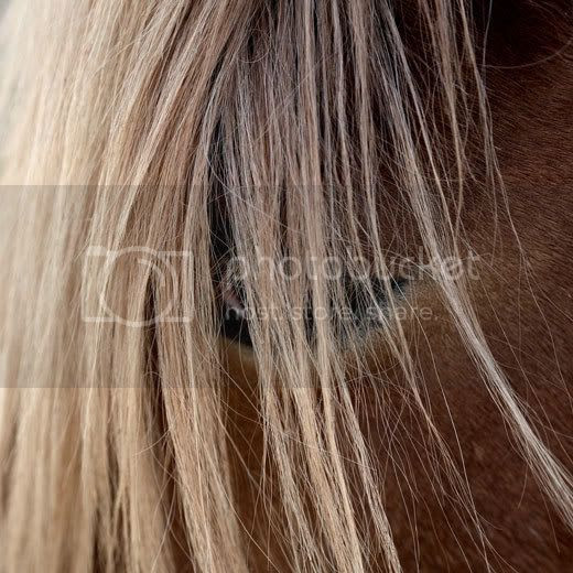 Hesteblogging