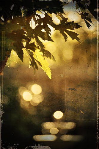"""Early morning hath gold bokeh in its mouth.""  Ben Frank Lens"