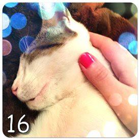 Instagram (16)
